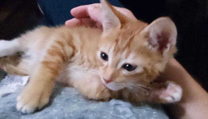 関西弁の猫さん